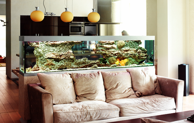 Quirky aquarium decorations townhouse aquarium 37 asian for Aquarium for home decoration